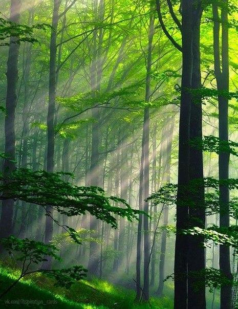Утро в лесу!!!!!!