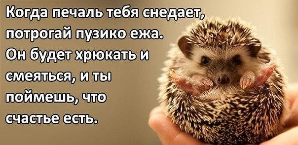 http://cs407618.userapi.com/v407618086/3620/a5xplxnQCKY.jpg