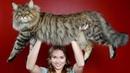 Какие 10 самых красивых пород кошек? 2 часть.