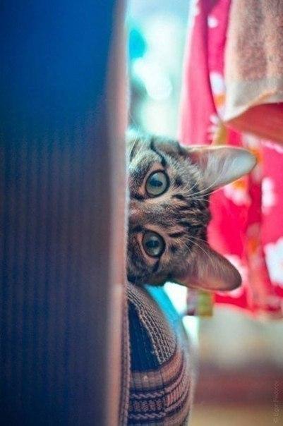 Кто не спрятался - я не виноват :)