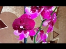 Мои орхидеюшки. Сентябрь2018г. Есть новенькие!