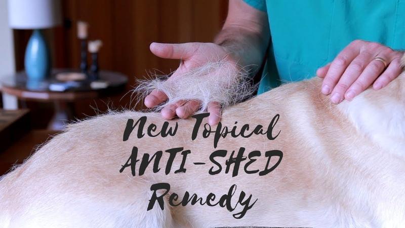 Остановите линьку собаки с помощью нового средства Stop Dog Shedding With New Anti Shed Remedy