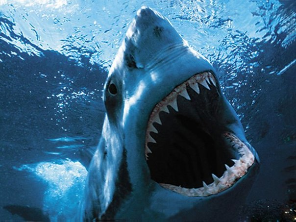 Американский серфер спасся от акулы, ударив ее в глаз.