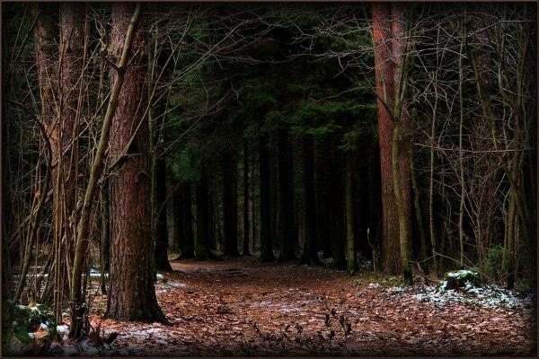 Чаща леса IP4Ga7C6w8I