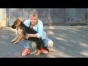 БОГАТЫРЬ РОН. Щенок Немецкой овчарки 3 мес. Puppy German Shepherd 3 months