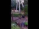 Гоша - супер охранный пес! обожаю его