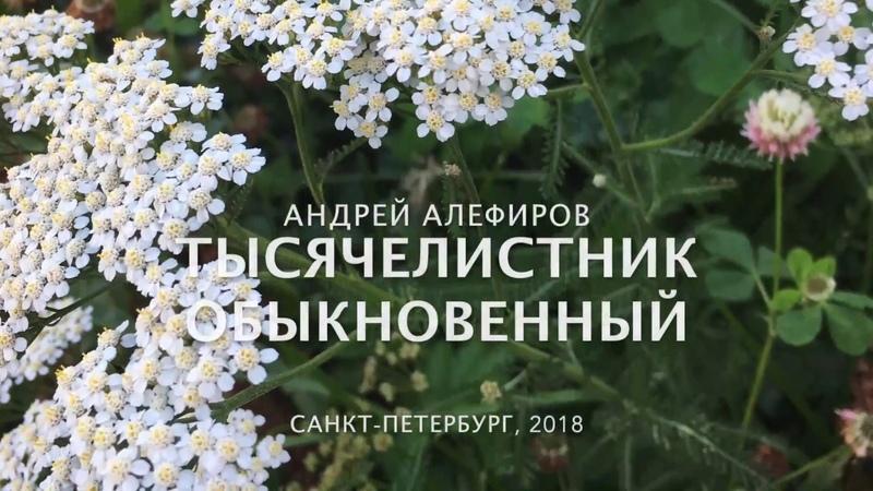 Алефиров А.Н. Тысячелистник обыкновенный