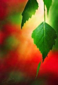 Отцвели цветы, падают листья, птицы молчат, лес пустеет и затихает.ОСЕНЬ. - Страница 6 WSt-s1jBTkc