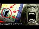 БИГФУТ ХОЧЕТ НАС УБИТЬ! ЙЕТИ В РЕАЛЬНОЙ ЖИЗНИ - BIGFOOT'S TRYING TO KILL US! BIGFOOT IN REAL LIFE!