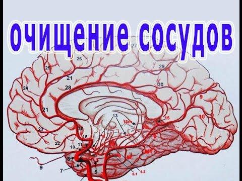 Очистка и лечение сосудов головы народной медициной