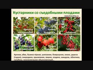 Марафон по кустарникам_день 3