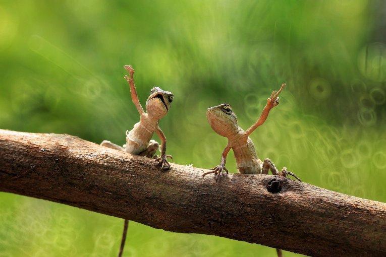 Зверушки. Фото © East News/ Solent News