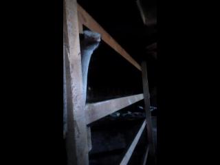 страус вешкелица