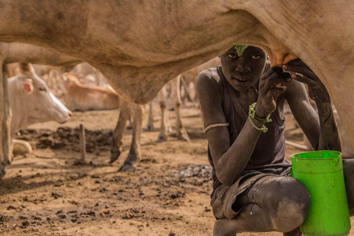 Молочишко для детишек: Юный африканский дояр