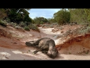 BBC Прогулки с Динозаврами - Баллада о Большом Але - Съемка Фильма - (BBC Walking with Dinosaurs -The Ballad of Big Al)(2000)