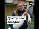 Доктор Даллакян отпускает спасенных лебедей на волю