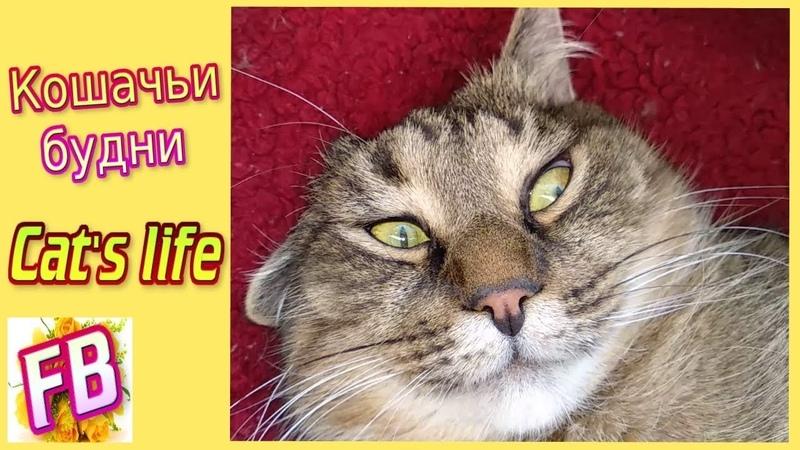 FB Cat life Кошачьи будни Кошка ловит муху Милые котики