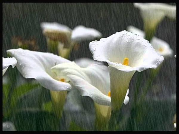 Pequeña flor Fausto Papetti.