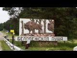 Беловежская пуща вольеры с животными