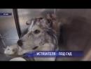 За жестокое избиение собаки оренбуржец пойдёт под суд