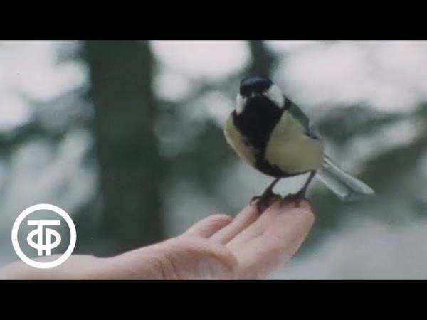 Рядом с нами. Документальный видовой фильм (1985) » Freewka.com - Смотреть онлайн в хорощем качестве