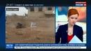 Новости на Россия 24 • Клоуны спасут Алеппо: западные СМИ показали новую жертву