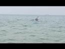 Дельфин с рыбой