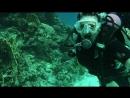 Волшебное погружение в Красного моря