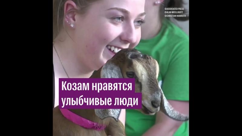 Козам нравятся улыбчивые люди эксперимент ученых