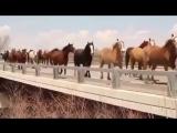 Сколько много лошадок