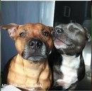Собаки могут влюбляться.