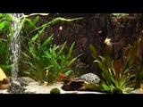 3 HOURS of Relaxing Aquarium Fish, Coral Reef Fish Tank &amp Relax Music 1080p HD #2