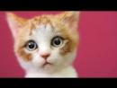 Валяный котик от @wakuneco