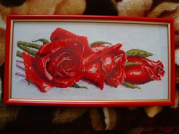 Три розы в росе
