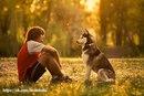 «Для своей собаки каждый человек — Наполеон. Вот почему так популярны собаки».