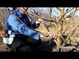 Весенняя обрезка яблони (видео урок) [zhezelru]