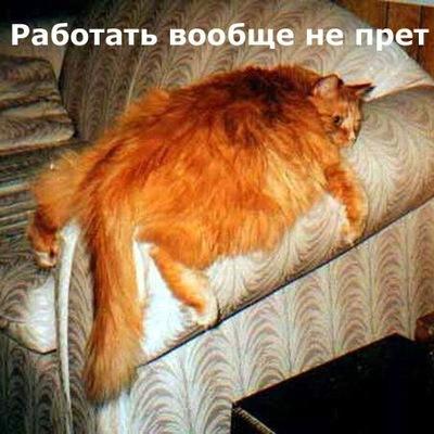 梅德 梅尔尼科, 5 ноября , Челябинск, id159705687