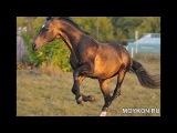 Породы лошадей на фото