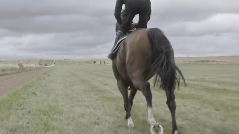 Racehorse Galloping