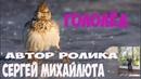 ШАНСОН (ЖЕКА) ГОЛОЛЁД