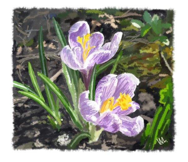 Сиреневого крокуса цветы встречают вместе с нами весен многих радость...