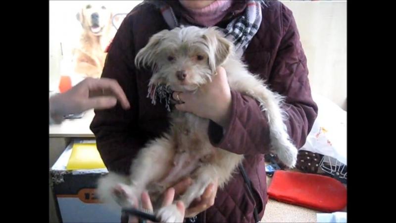 Спасение собак, часть 2