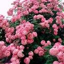 Душа должна пахнуть, как свежий весенний пион. Душа должна пахнуть счастьем»