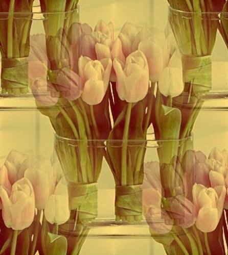 Цветочные и растительные фоны - Страница 3 Y5DNuYPOEjk
