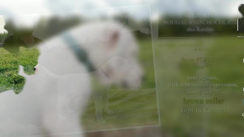 Белый Кит видеоролик