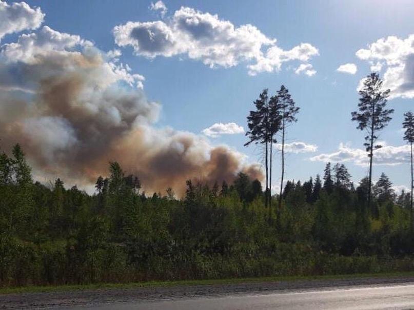 В Курганской области удалось стабилизировать ситуацию с лесными пожарами, возник...