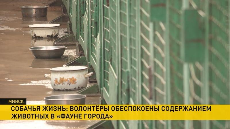 Волонтёры обеспокоены содержанием животных в Фауне города