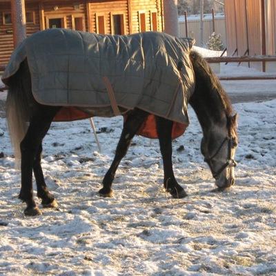 Конь-В Пальто, 11 сентября , Москва, id226533453