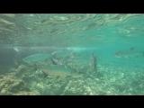 кайманы. лучшее место для рыбалки