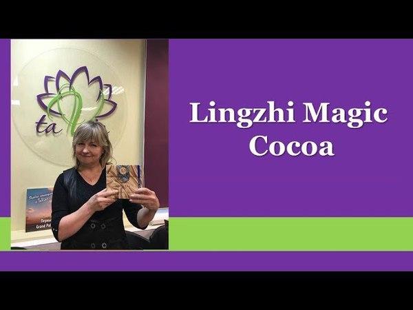 Какао с грибом Линчжи (Lingzhi Magic Cocoa) Напиток - контроль веса